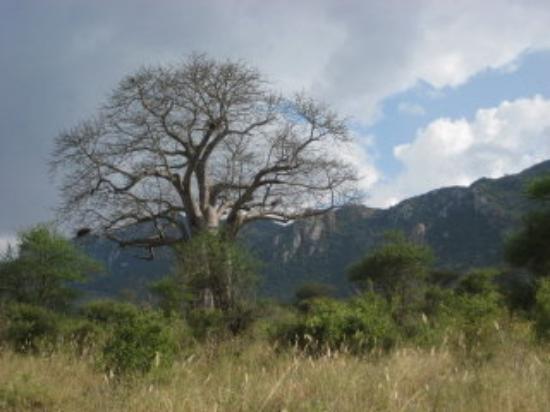 Tsavo National Park West, เคนยา: this is Tsavo West - breathtaking landscape