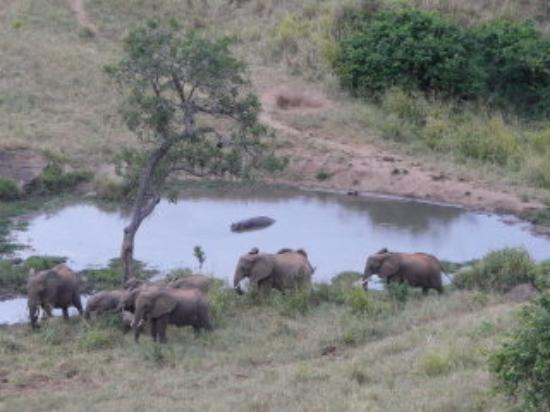 Tsavo National Park West, เคนยา: view from Rhino Valley Lodge - elephants watching hippo in waterhole