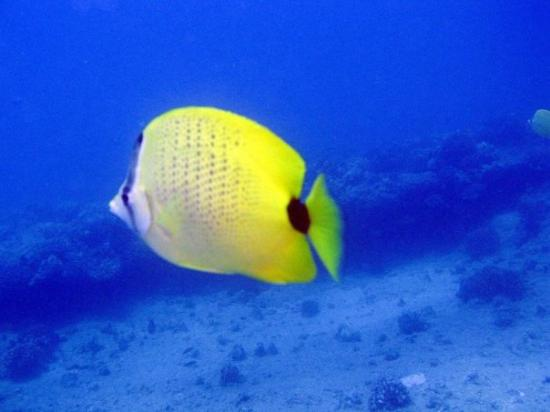 Oahu Diving ภาพถ่าย