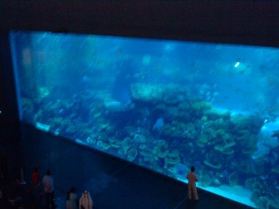 Aquarium géant - The Dubai Mall