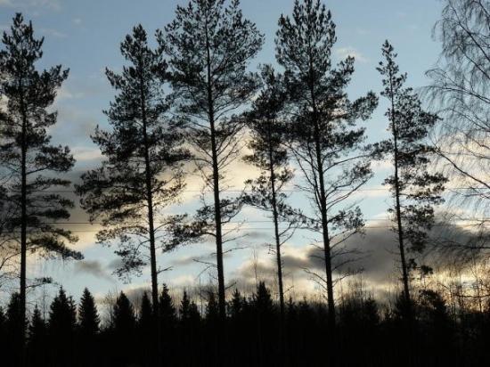 Iisalmi, Finnland: más arbolitos XDD