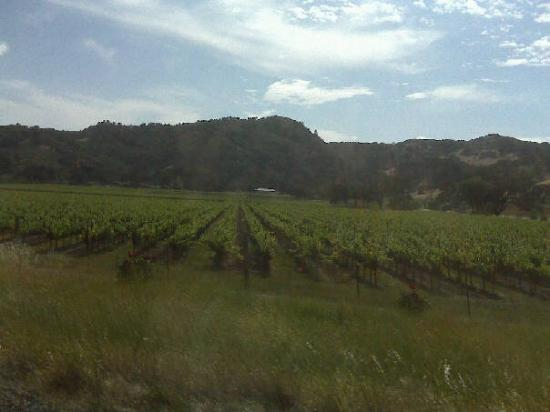 โซโนมา, แคลิฟอร์เนีย: Wine country
