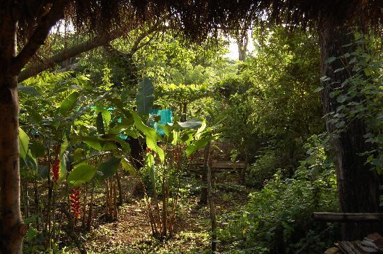 La Mariposa Spanish School and Eco Hotel: from the backyard at La Mariposa