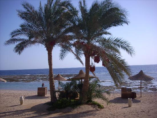 Kahramana Beach Resort : plage