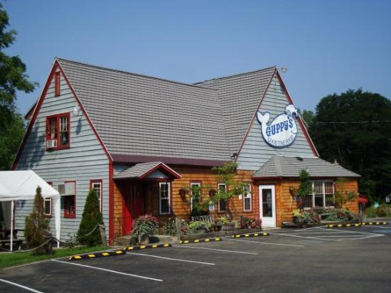 Maple Springs, NY: Guppy's