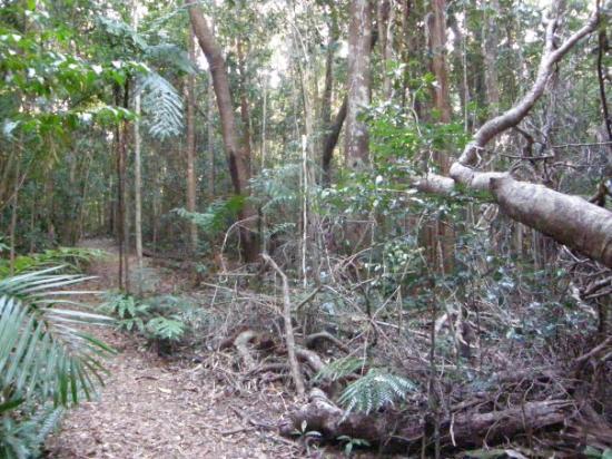 Paluma Australia  city photos : Forest trail, Paluma, Australia Picture of Paluma, Queensland ...