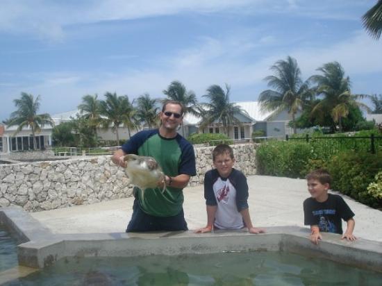 Cayman Turtle Centre: Island Wildlife Encounter: Boys and turtle