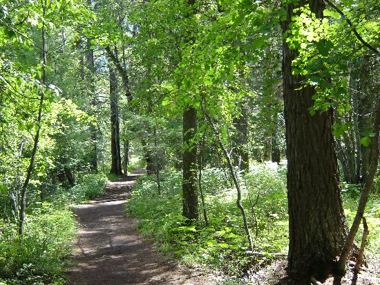 Apgar Campground: Trail between campground and Apgar Village