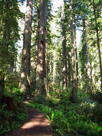 Redwood National Park: Lady Bird Johnson Grove - The Trail