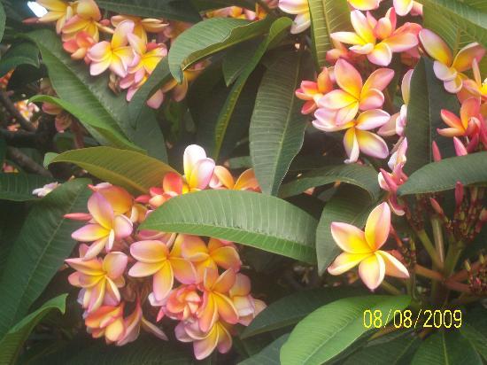 Quinta do Lagar : encore des fleurs