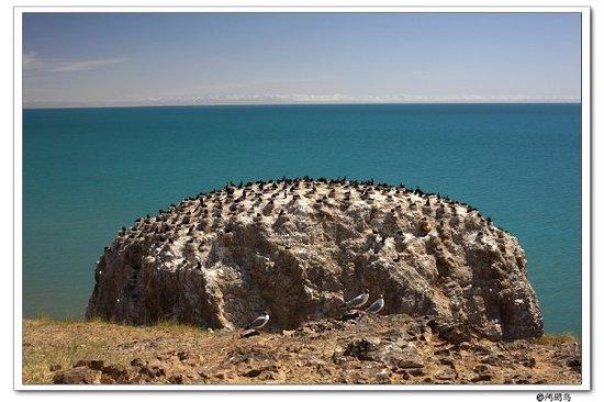Foto de The Birds Island