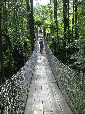 Arenal Observatory Lodge & Spa: The hanging bridge en route to the Smithsonian rooms, pool, hot tub, and waterfall