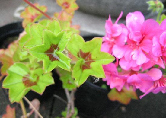 Hillview Cottage flora