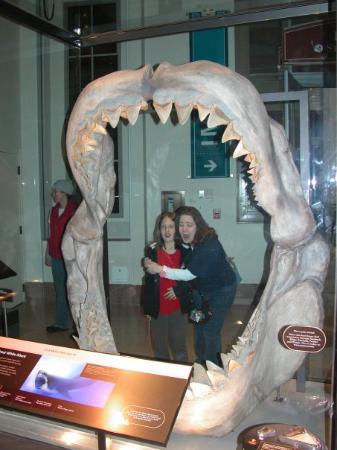 อาคารสถาบันสมิธโซเนียน: Kayce and Jen in the Sharks mouth