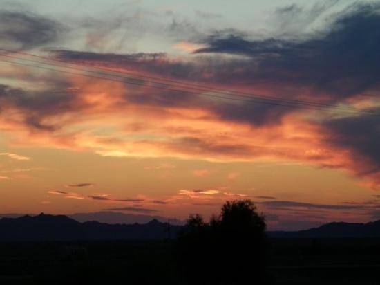 Gambar Palo Verde