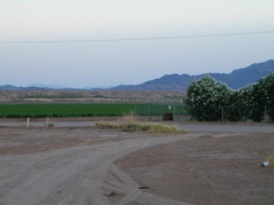 Palo Verde, CA: Farm view from Wheelie's.
