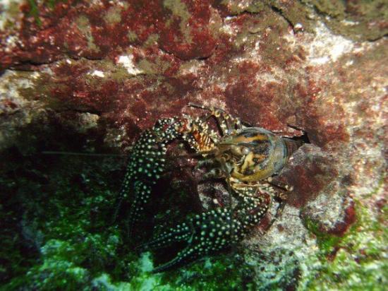 Chiefland, FL: Crawfish