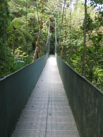 Monteverde Cloud Forest Reserve, คอสตาริกา: One of many bridges at Monteverde Park.