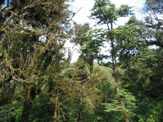 Monteverde Cloud Forest Reserve, คอสตาริกา: Lush greenery at Monteverde Park.
