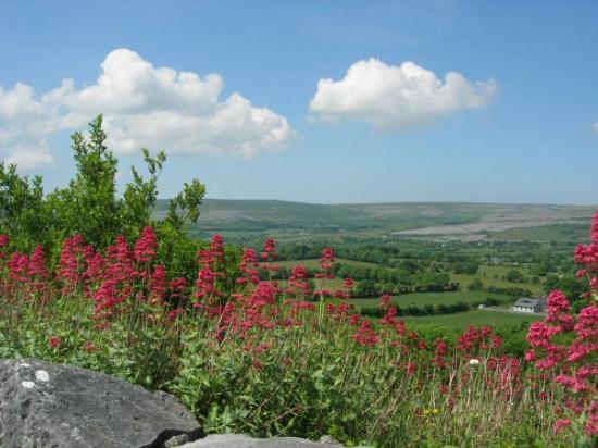 บลาร์นีย์, ไอร์แลนด์: Irish Countryside , County Clare