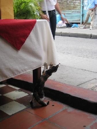 Restaurante Casa Suiza: Resident kitty!