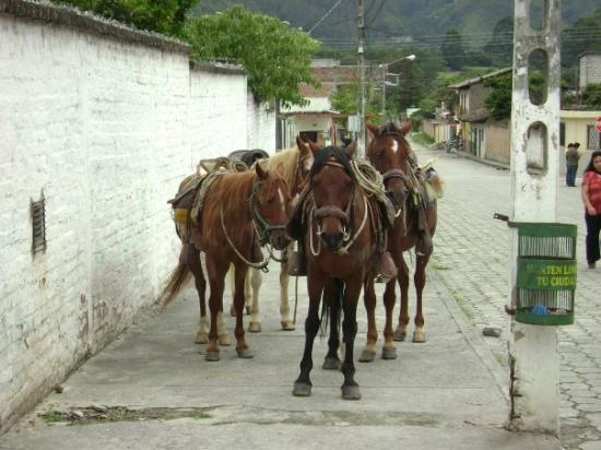 Vilcabamba, Ekvador: wiating for godot, or any available tourist