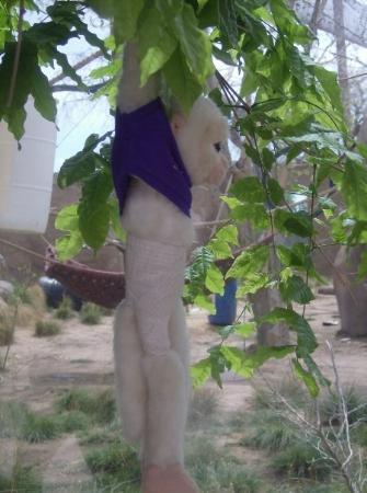 อัลเบอร์เคอร์กี, นิวเม็กซิโก: Hangin with his homies