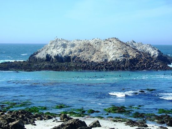 Carmel, Californie : Seals and Sealions