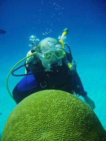 Aqua Safari Dive Shop: It's a brain!