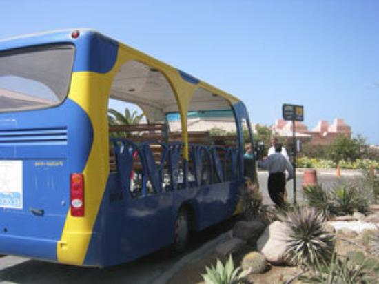 เอลกูนา, อียิปต์: The buses in El Gouna were open - no glass in the windows necessary because the climate is so wa