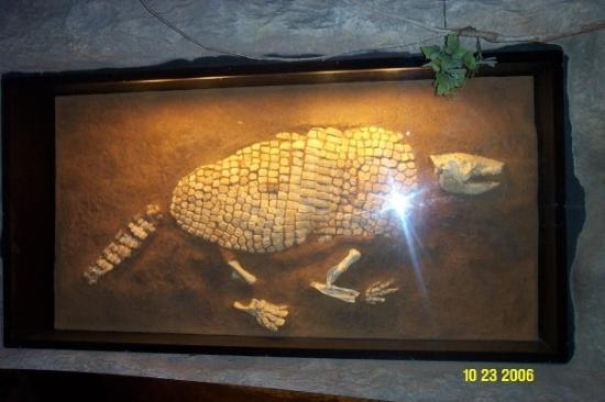 The Houston Museum of Natural Science ภาพถ่าย