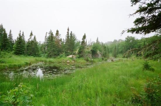 Isle Royale National Park, มิชิแกน: It was green