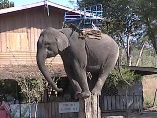 เมืองกาญจนบุรี, ไทย: Un elefante subiendose a un poste en Kanchanaburi