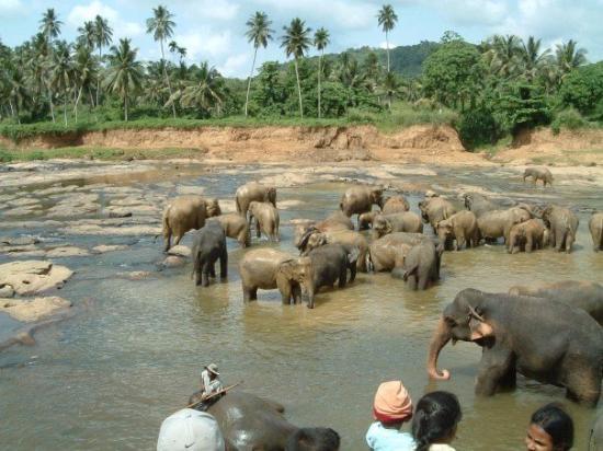 เนกอมโบ, ศรีลังกา: A huge bath for the elephants