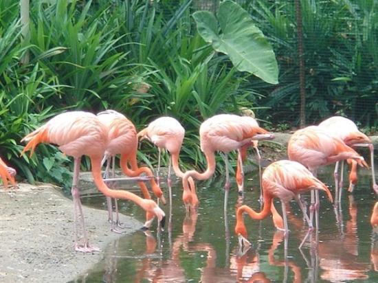 สวนนกจูร่ง: julong bird park