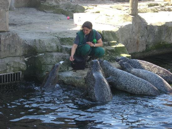 Feeding Time at Zoo am Meer