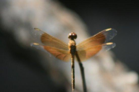 Foto de Darwin