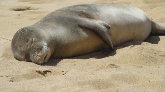 Na Pali Coast State Park: no its not dead