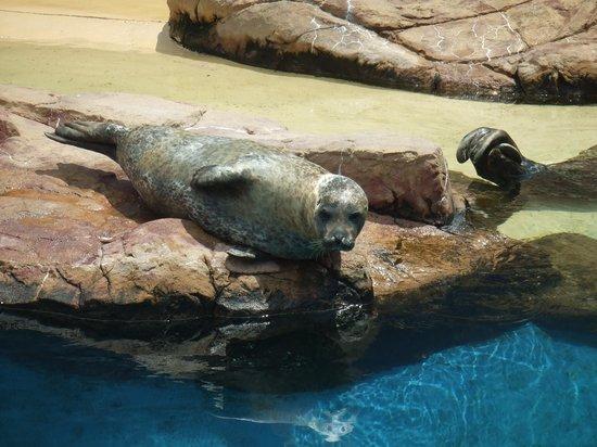 Long Island Aquarium: シーライオンのショーです!