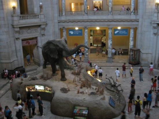 พิพิธภัณฑ์ประวัติศาสตร์ธรรมชาติแห่งชาติ สมิธโซเนียน: Inside view of Natural History Museum