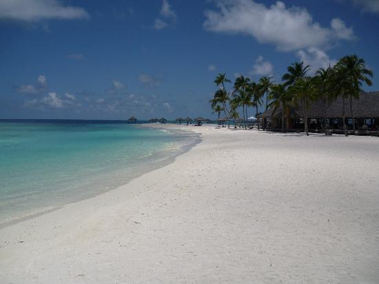 Veligandu Island Resort & Spa: 5