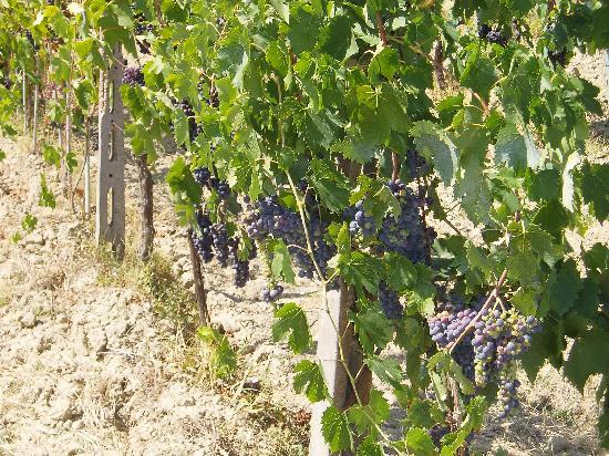Agriturismo Montalbino: Local nectar