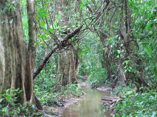 Casita Corcovado: Parque Nacional Corcovado