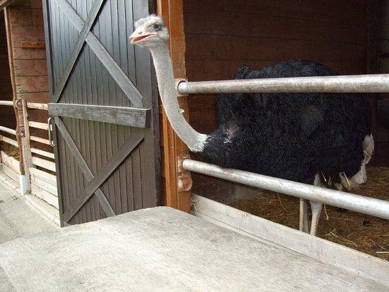 Tonden Farm Akaigawa Ranch