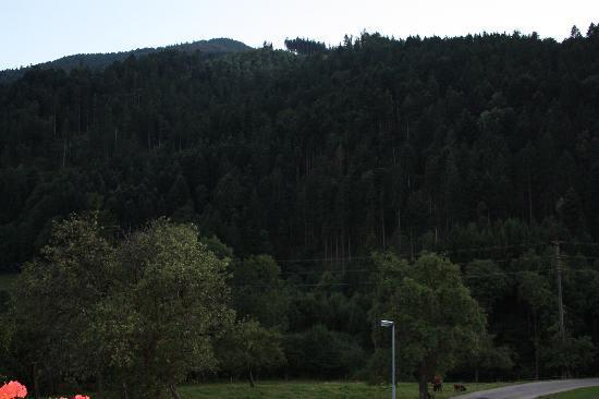 Landgasthaus Grüner Baum: Desde mi terraza