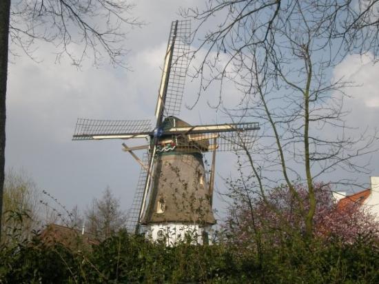 Maasdam صورة فوتوغرافية