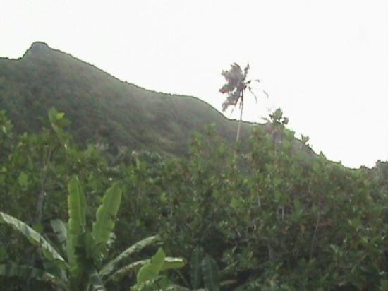 Parc national des Samoa américaines Photo