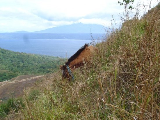 Tagaytay, Filippinerna: Just a horse grazing on the side of the Taal Volcano, Philippines