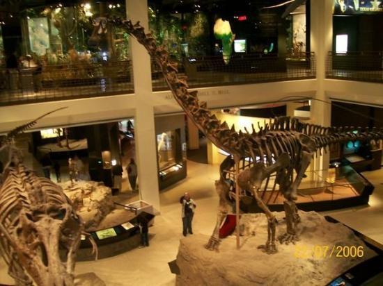 The Houston Museum of Natural Science: Musée d'histoire naturelle de Houston