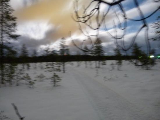 Ylikiiminki, Finlandia: Kortesuolta, tolkuttoman pitkällä valotusajalla kamera puuhun nojaten. Pitää kai sitten hankkia
